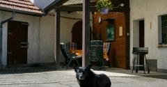 Der Wachhund bewacht das Haus