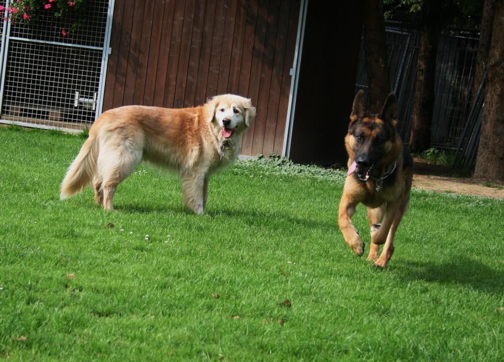 Sammy & Max