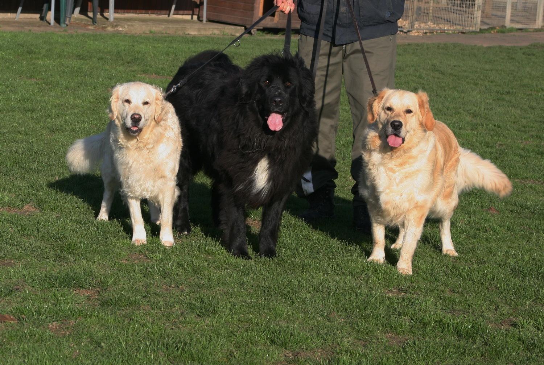Gina, Gismo & Buddy