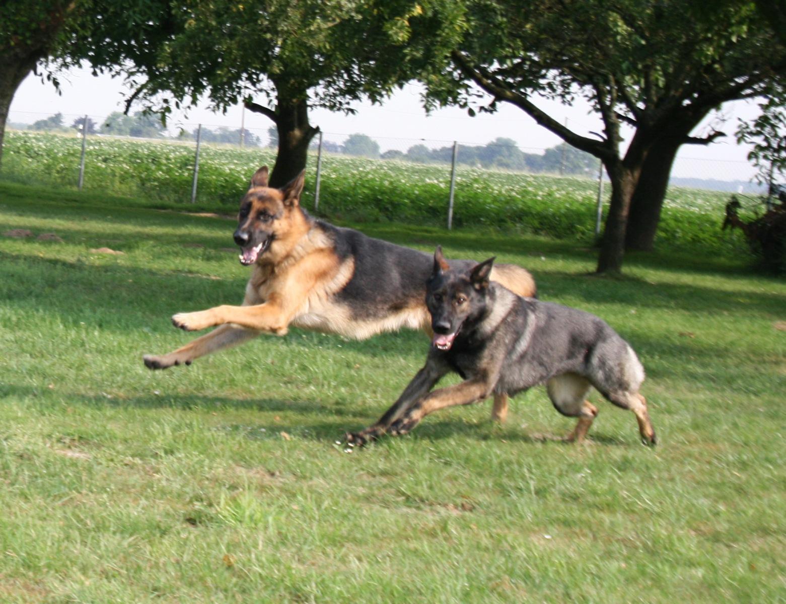 Merlin & Thaya