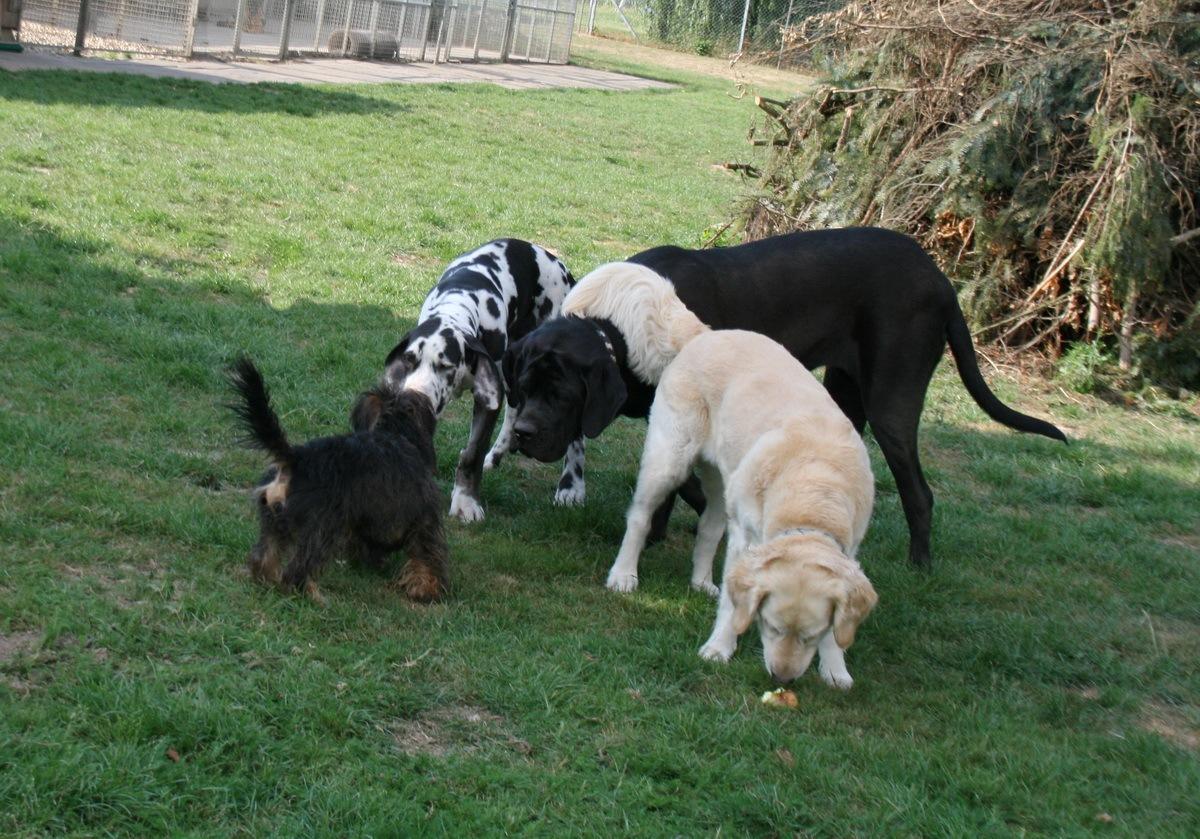 Consano, Hank, Hope & Loona