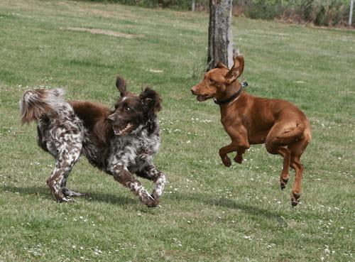 Ein Bild von spielenden Hunden als Weiterleitung zu unserem Youtubevideo